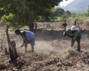 Farm workers clearing land in the Meceburi Forest in Mozambique (Photo: Mike Goldwater/IIED)