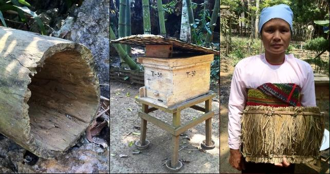 Three images showing a traditional beehive made from a hollowed out log, a modern bee box, and female beekeper, Truong Thi Hung.