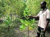 Man in a mangrove forest