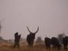 A shot from the Herding Chaos film made by Saverio Krätli
