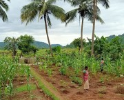 Woman cultivating a garden with plants and palm trees.