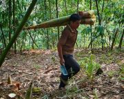 A migrant bamboo farmer harvests bamboo shoots in Tianlin County, Guangxi Zhuang Autonomous Region, China. The UN PAGE conference was told China is reskilling one million workers from forestry into other industries (Photo: Nick Hogarth/CIFOR, Creative Commons, via Flickr)