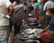 Hilsa fish at a wholesaler fish market in Dhaka (Photo: Ina Porras/IIED)
