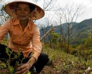 We need a plan. A plan that will guide us towards achieving real impact for smallholders. We are now documenting our work on creating Impact Pathways and Theories of Change in a new Learning Brief (Photo: G Smith/CCFAS)