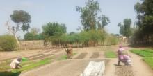 Women working the land