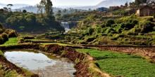 An irrigation pond.
