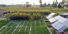 A man stands in a field looking at solar irrigation panels.