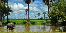 Cambodia's rural population is heavily reliant on small-scale rice production. The Clean Sugar Campaign campaigns against large-scale plantations that push smallholders off their land (stefans_box, Creative Commons via Flickr)