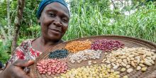 A woman displays a tray of bean seeds. Researchers have introduced 15 new varieties of beans in north-western Uganda to help farmers cope with extreme conditions. Delegates to CBA11 will consider how to deliver effective local climate action (Photo: Georgina Smith/CIAT, Creative Commons via Flickr)
