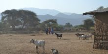 The sun beats down on Dongo village, Tanzania. Children walk with cattle while women carry water buckets (Photo: Chih-Jung Lee)