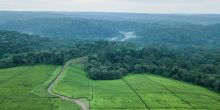 An aerial view of the Southwest Mau Forest and neighbouring tea estates in Kenya (Photo: Patrick Sheperd/CIFOR, Creative Commons via Flickr)
