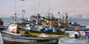 Boats belonging to small-scale fishers in action from Ancon in Peru