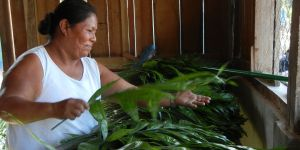 Women living in Guatemala's Maya Biosphere Reserve are trained to sustainably harvest xate palms, providing them with income and preserving the reserve's biodiversity (Photo: Dani Newcomb/USAID, Creative Commons via Flickr)