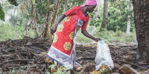 A woman harvests palm fruit in Tanzania