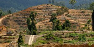 A road through deforested land