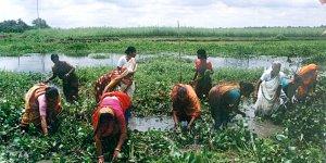 women working in the landscape