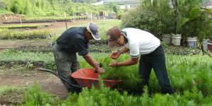 Reforestation program in Guatemala (Photo: Enrique Varahona)
