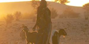 A woman stands with her goats in a dryland area in Niger (Photo: Stephen Anderson)