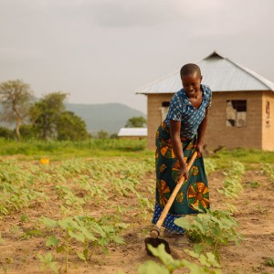 Woman tilling soil with a hoe.