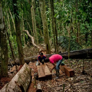Man and woman cut a tree into planks.