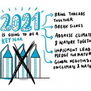 """An illustration with the words: """"2021: this is going to be a key year"""" linking to 1. Bring threads together 2. break siloes 3. address climate change and nature together 4. implement leader's pledge for nature 5. global negotiations on climate and nature"""