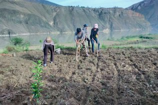 People hoeing and planting in a field