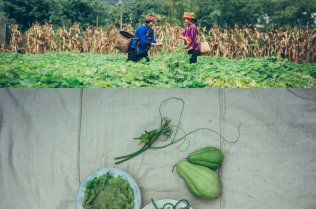 Women in a field and a close-up of vegetables