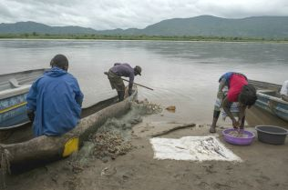 Mukula harvesting provides a critical source of income for villagers who traditionally rely on fishing and farming for their livelihoods