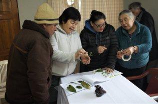 Women identifying different trees