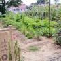 Entrance to a garden.