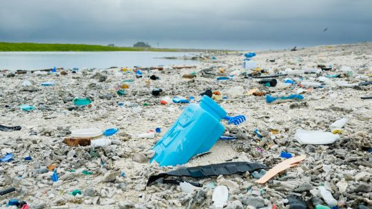 Plastic debris litters the beach on Clipperton Island, a tiny uninhabited coralatoll in the easternPacific Ocean (Photo: Clifton Beard, Creative Commons via Flickr)