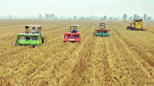 Combine harvesters in a wheat field