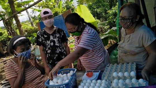 women distributing counting eggs