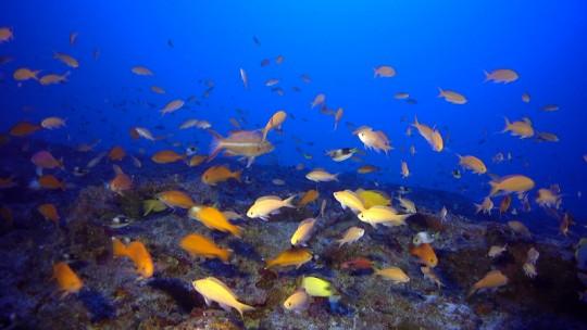 Shoal of fish.