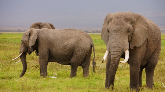Two elephants.