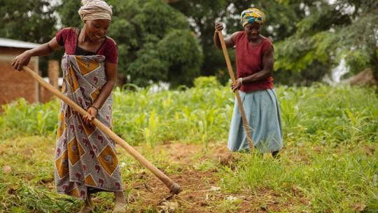 Women using hoes in a crop field in Kilosa, Tanzania.
