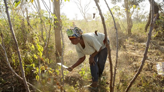 Woman cutting weeds in forest.