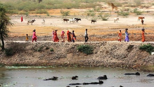 People walk along a river bank, with cattle in the water in front and fields behind