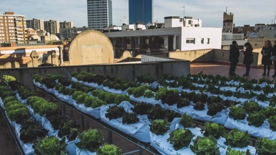 Rows of plants on a rooftop make up an urban garden.